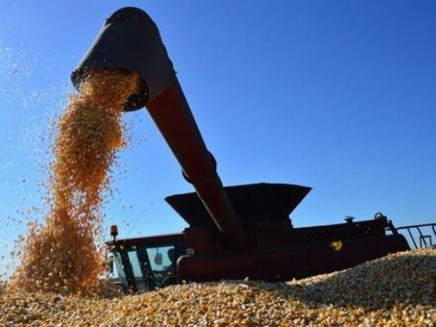 Levantamento aponta que 26% do milho 2ª safra já foram colhidos em MS