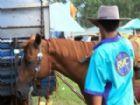 Medidas beneficiam produtores e praticantes de esportes com cavalos.