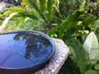 Recipiente com água parada serve para procriação do mosquito transmissor da dengue.